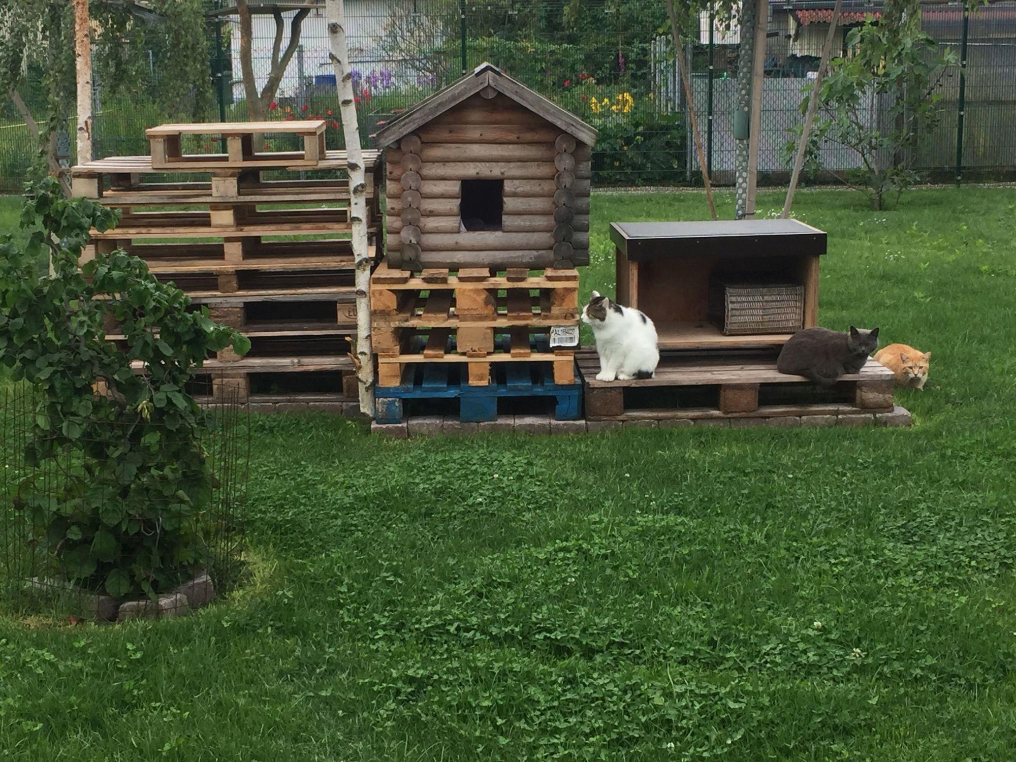 Katzenschutzverein 4.0 – das Katzenhaus Helmut Nimser ist fertig!