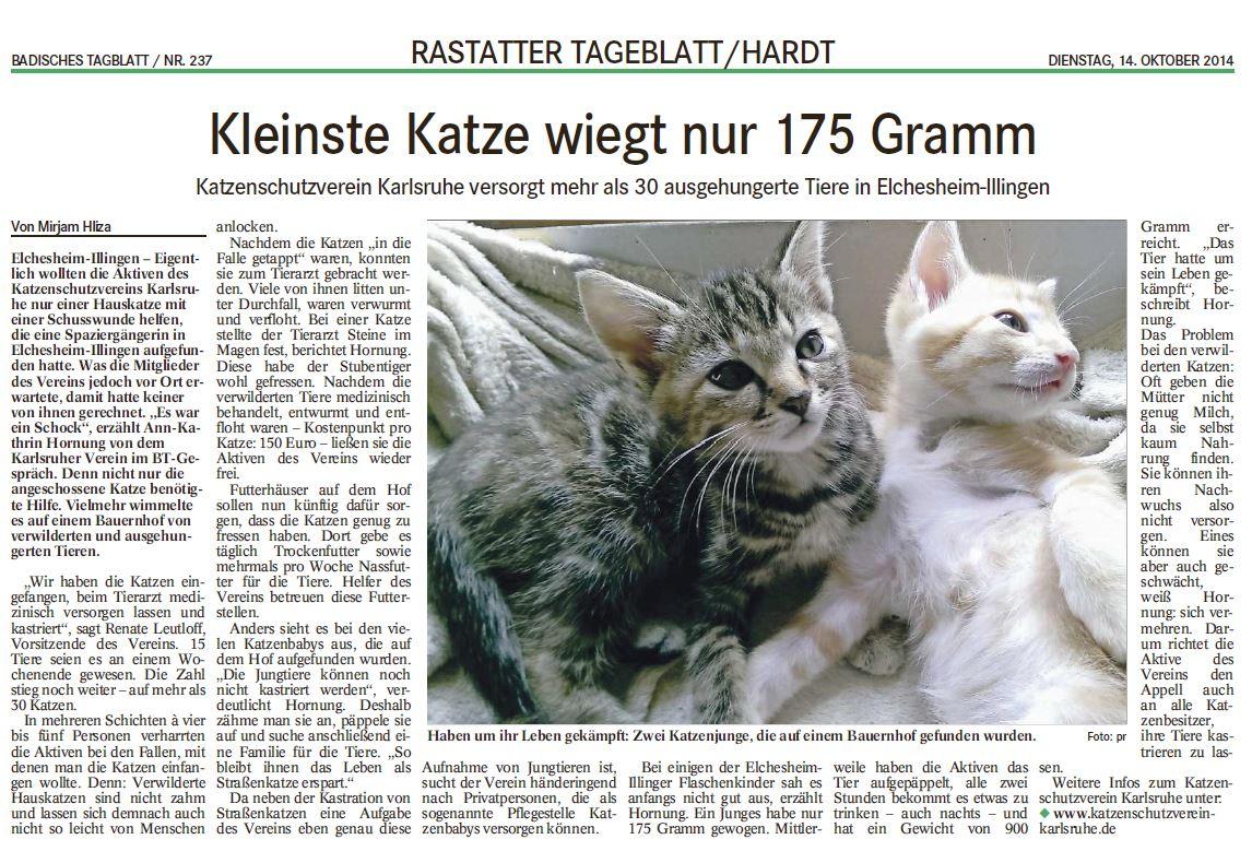 Kleinste Katze wiegt nur 175 Gramm