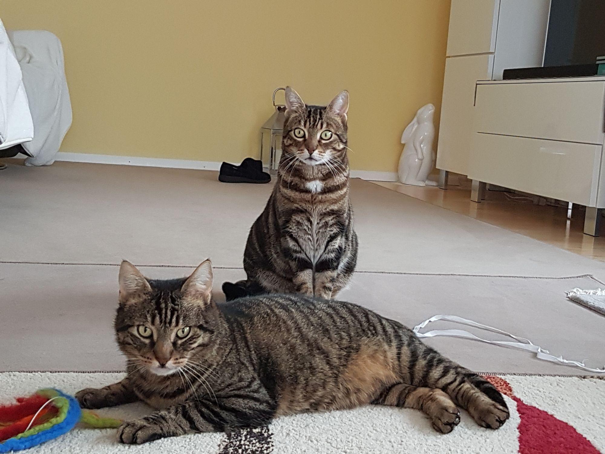 Fritzi und Bubele
