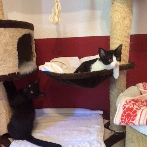 Lexi und Monty