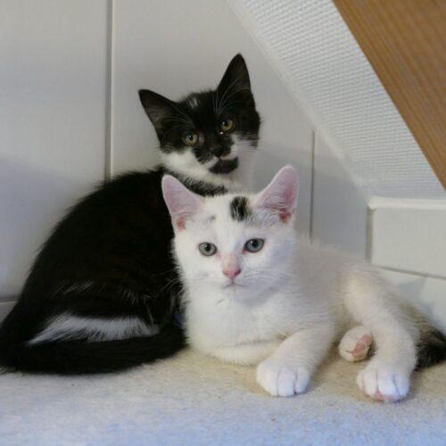Heini und Herbert