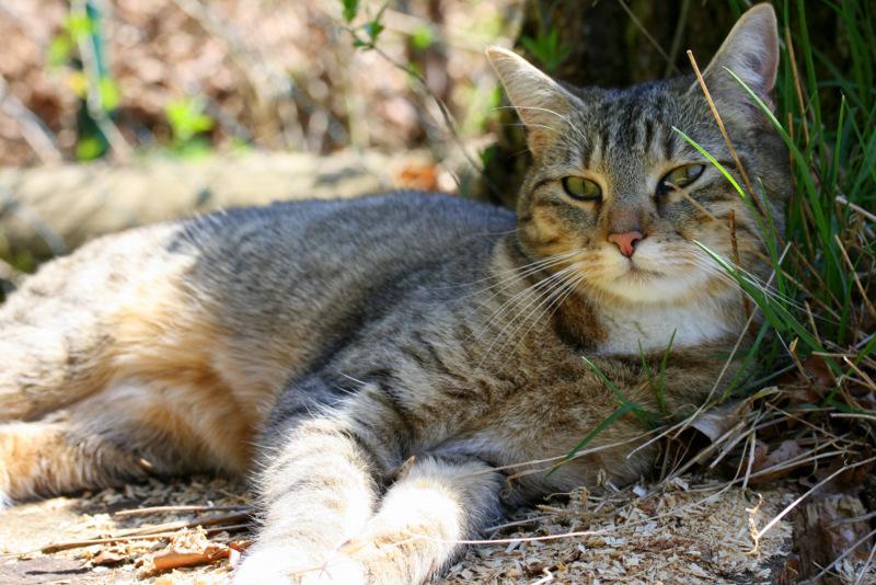 Die Natur der Katze
