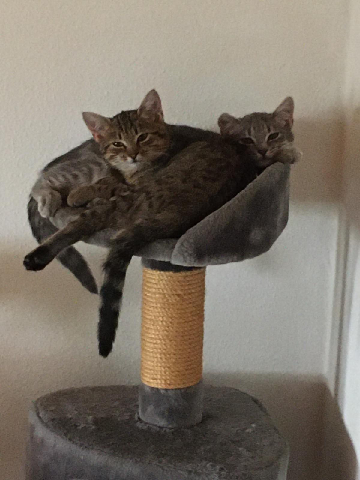Feli und Yoschi