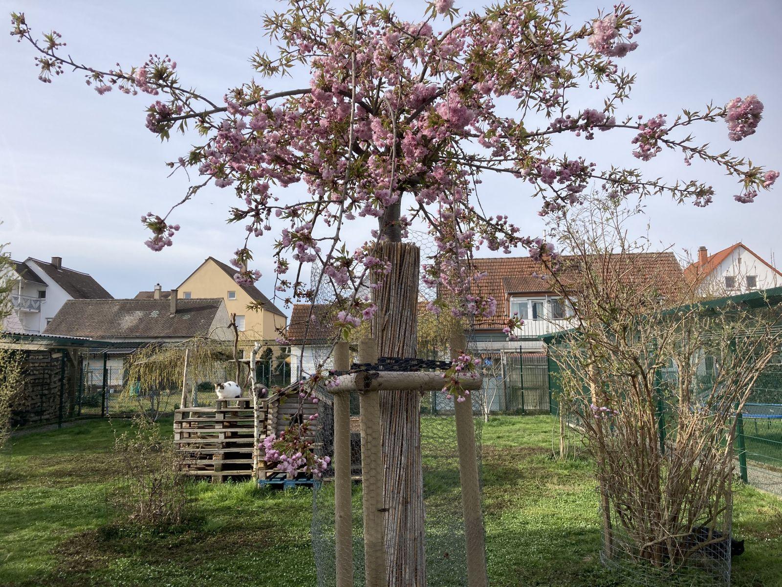 Der Frühling zieht ein im Katzenhaus Helmut Nimser.
